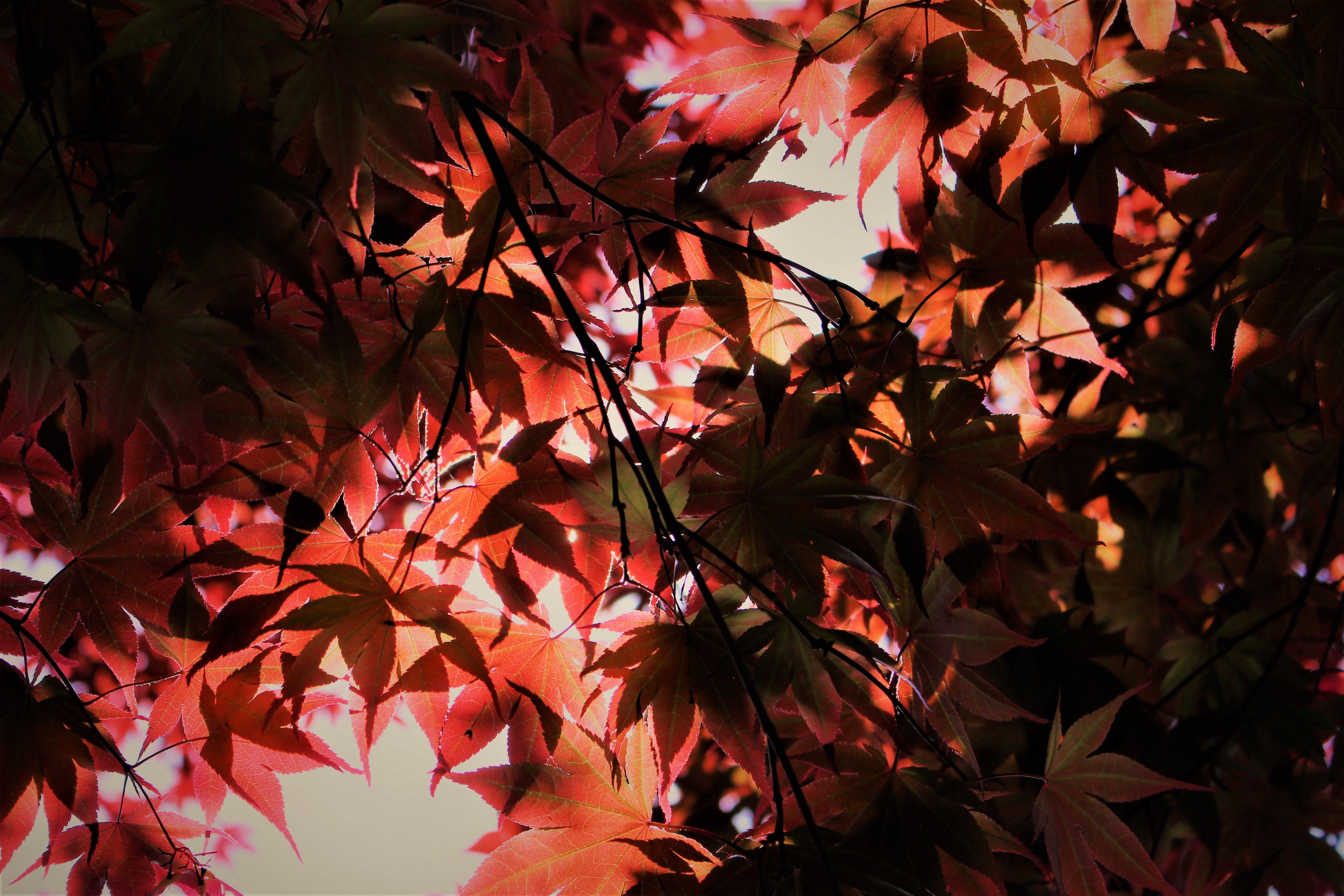 Photo of Leafy Tree