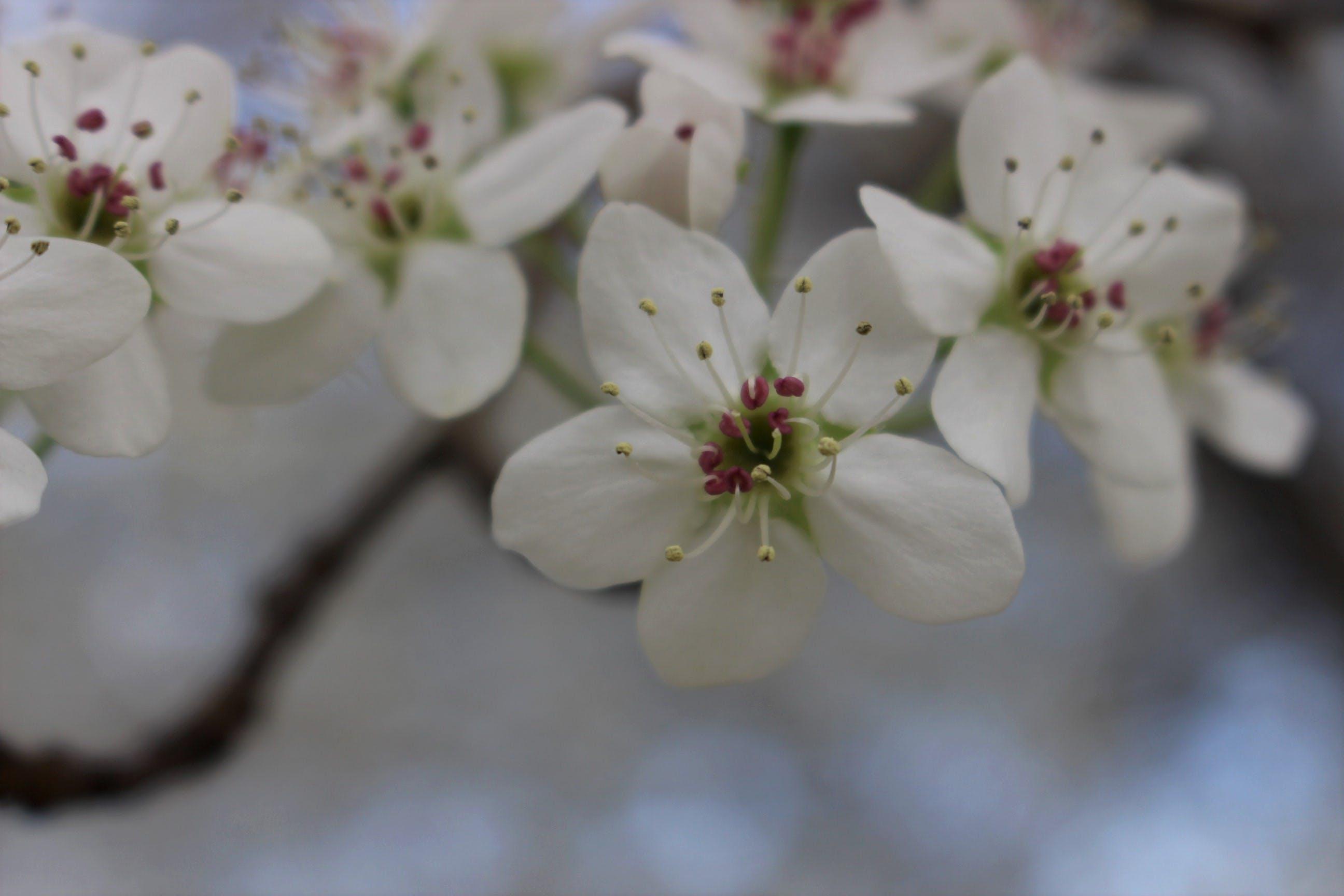 Δωρεάν στοκ φωτογραφιών με δέντρο, κλείνω τα λουλούδια, λουλούδια, φύση