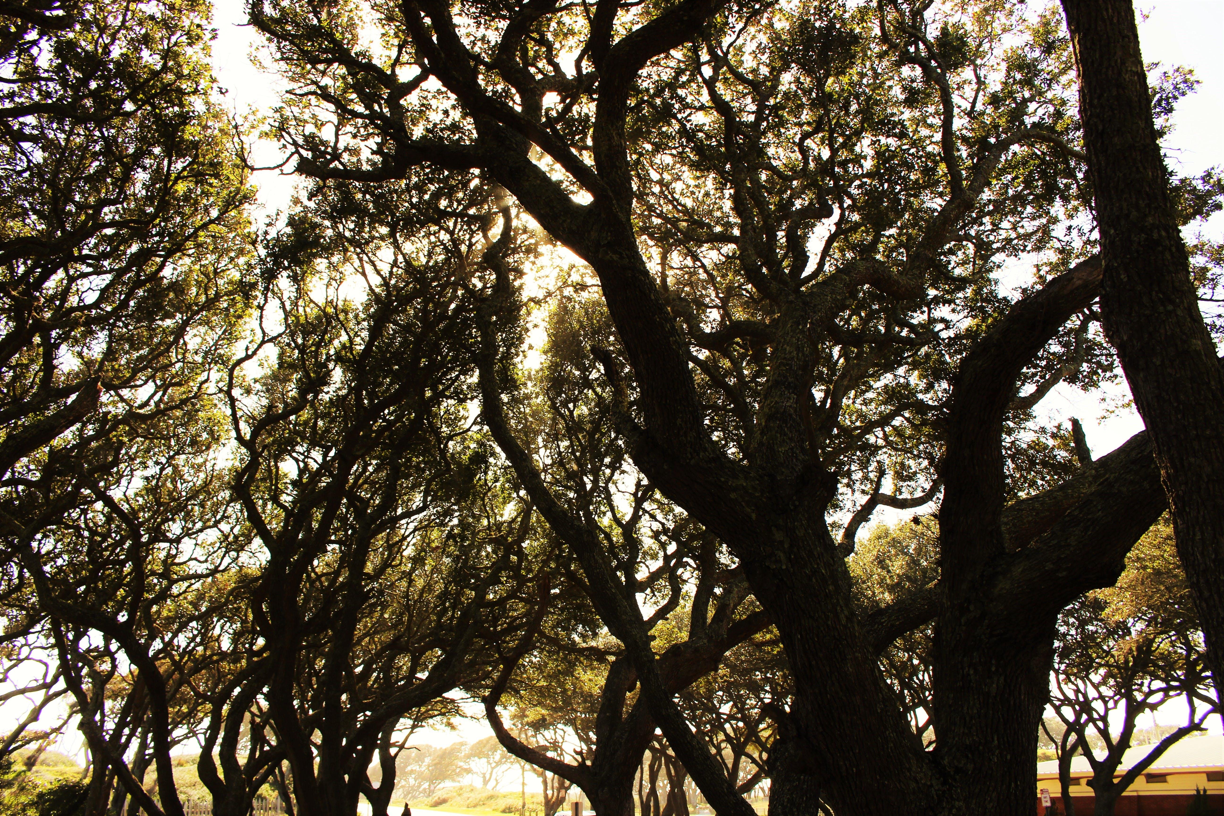 Kostenloses Stock Foto zu bäume, natur, sonne, die durch bäume emporragt, sonnig