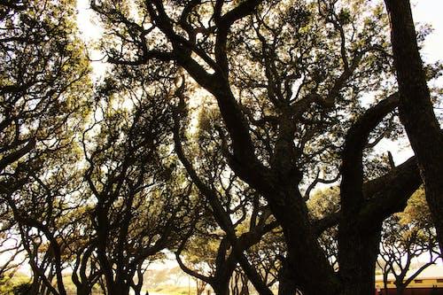Gratis stockfoto met bomen, Bos, natuur, zon die door bomen een hoogtepunt bereikt