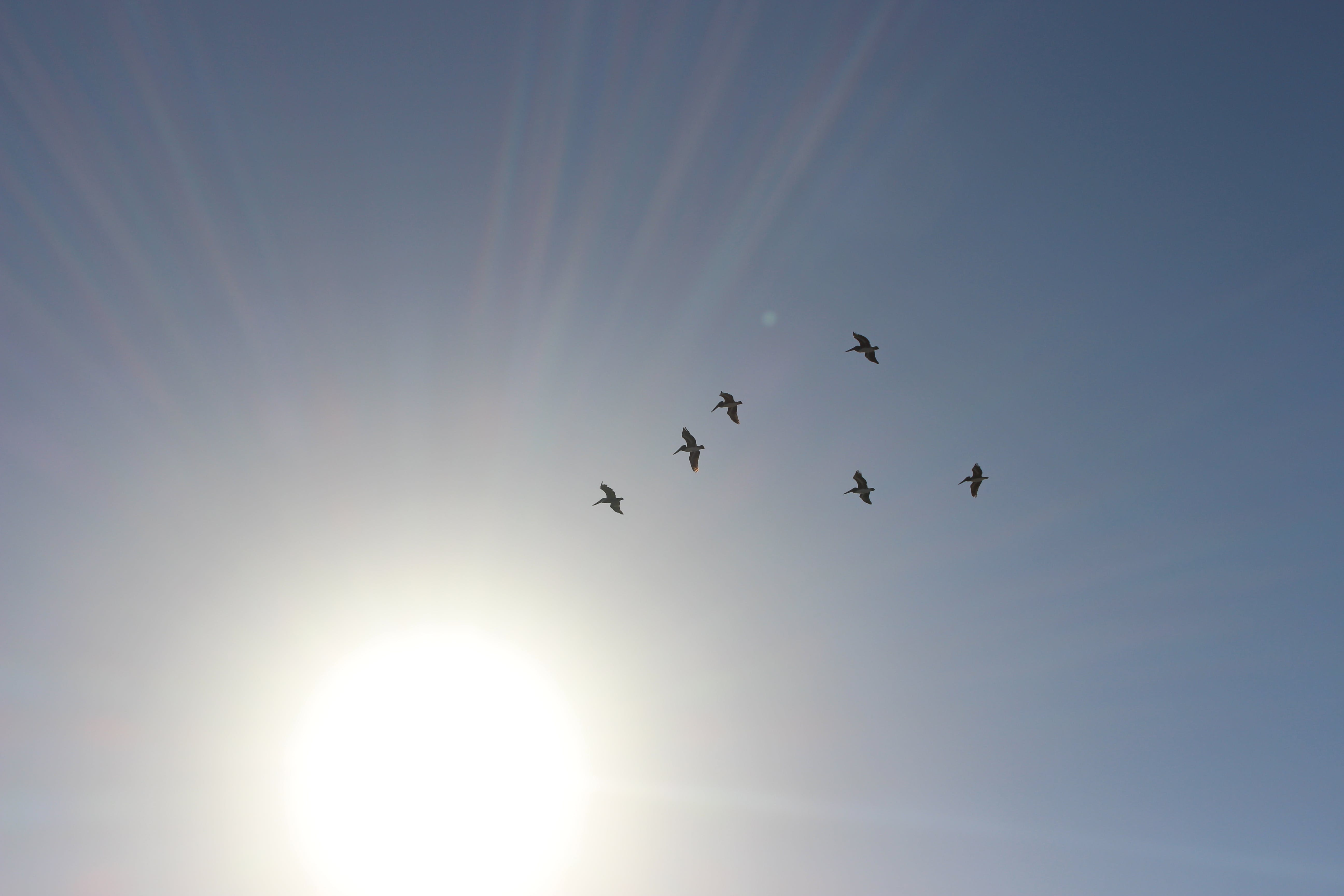 Δωρεάν στοκ φωτογραφιών με ζώα, ήλιος, κοπάδι, σμήνος πουλιών