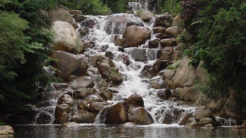 Darmowe zdjęcie z galerii z drzewa, kamienie, natura, woda