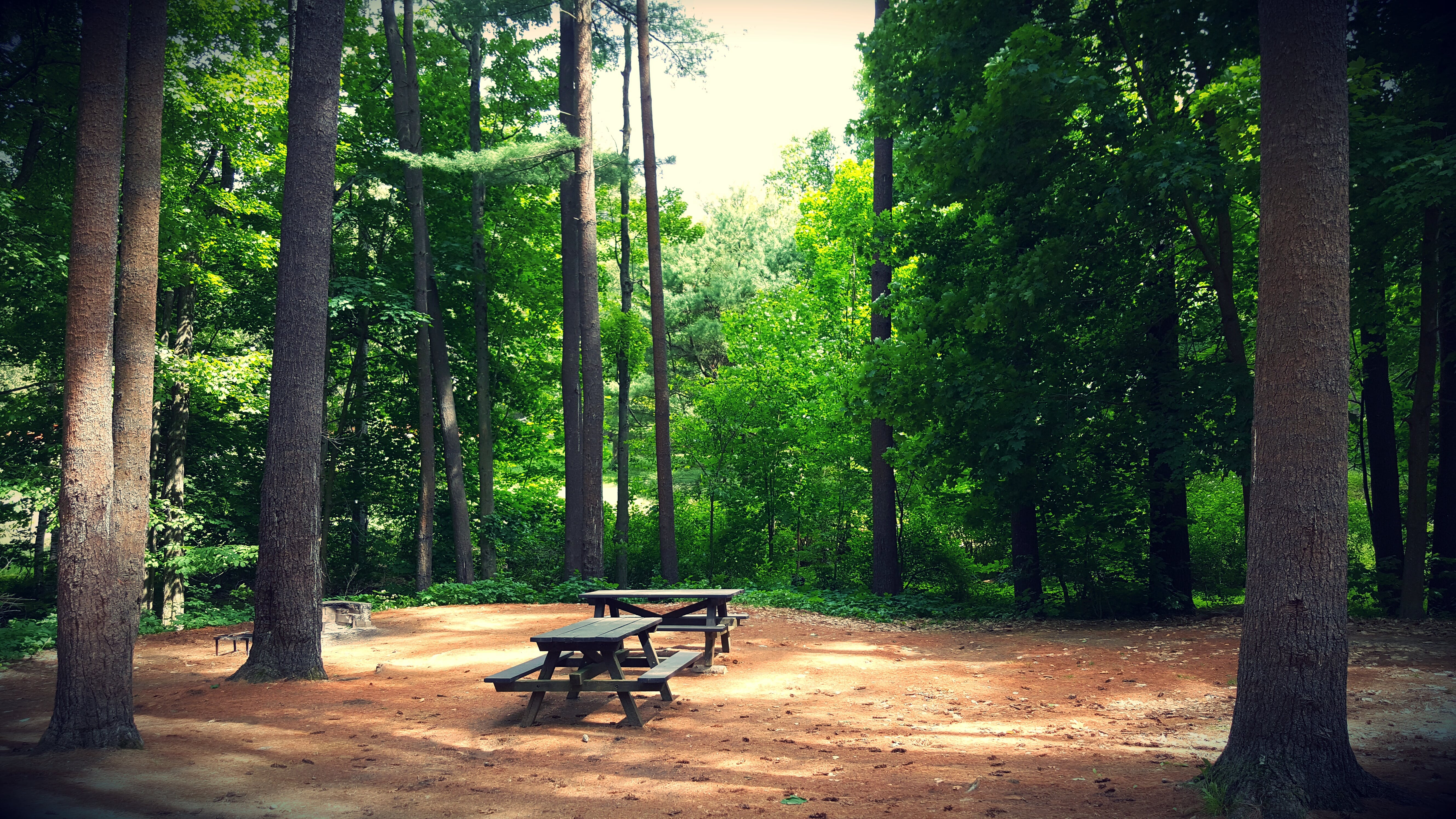 Free stock photo of bench, camping, forest, green