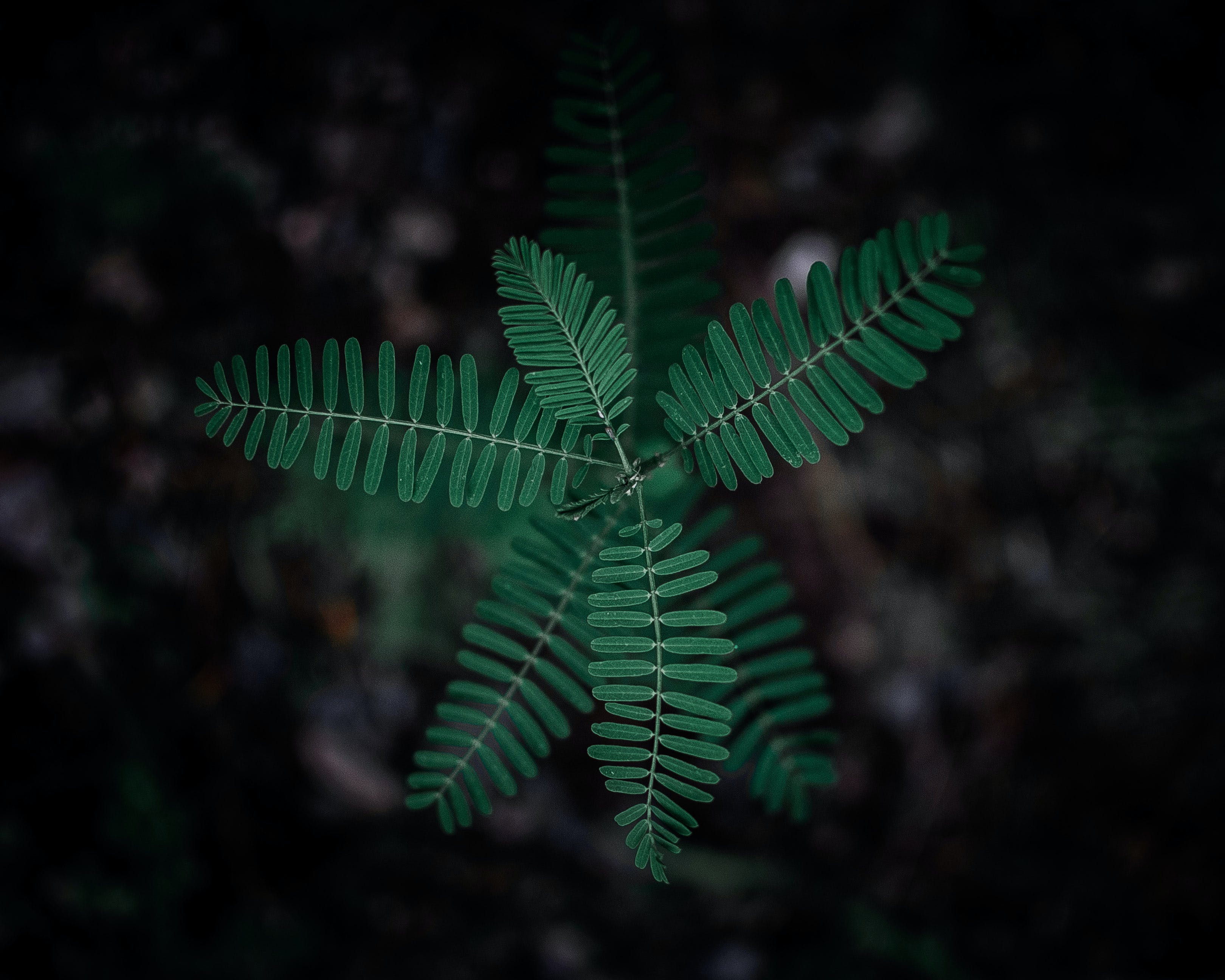 Selective Focus Photography of Green Leafy Plant