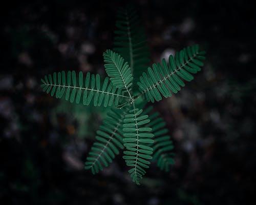 Безкоштовне стокове фото на тему «біологія, великий план, гілка з листям, зверху»