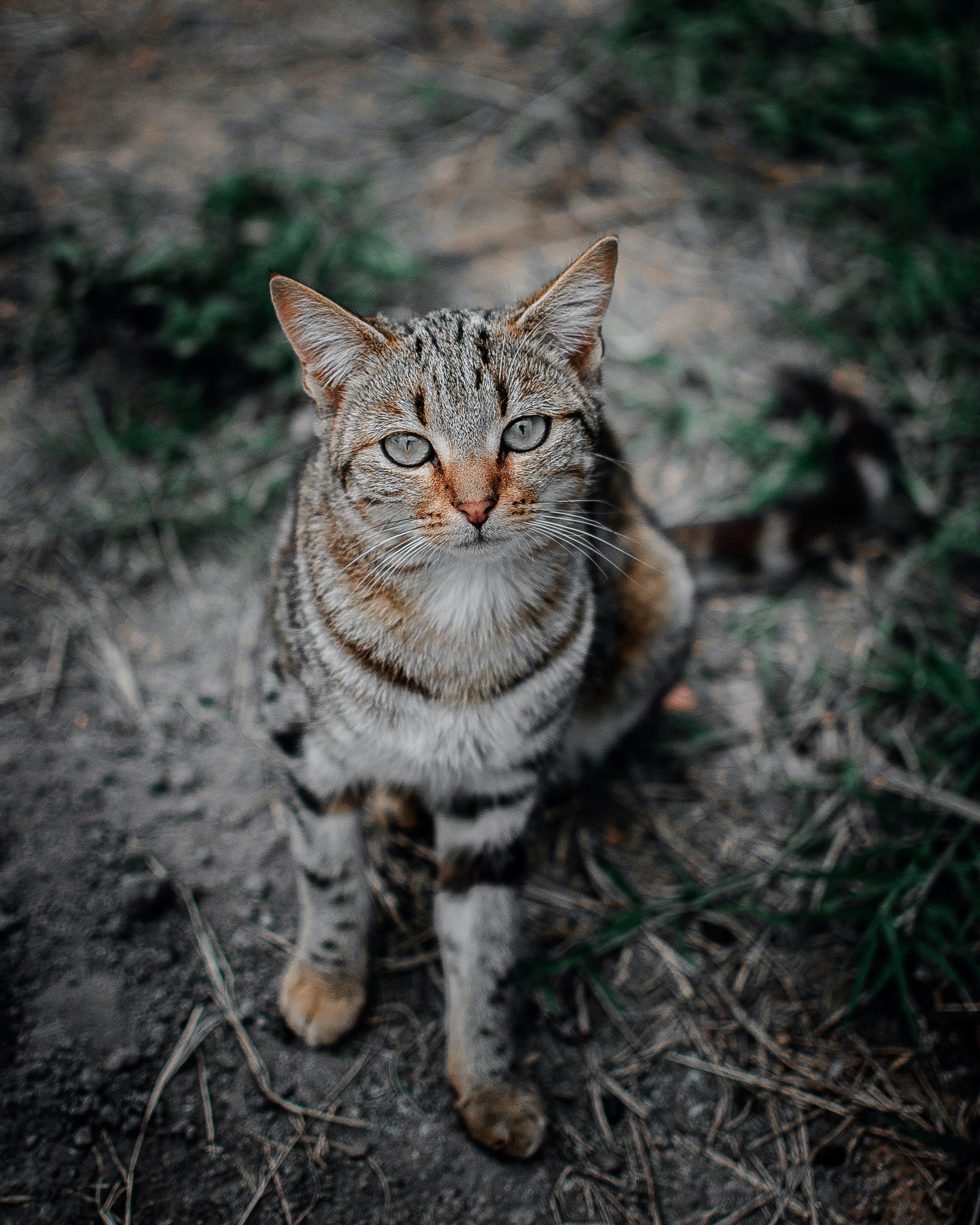 คลังภาพถ่ายฟรี ของ การถ่ายภาพสัตว์, การมอง, ขน, จ้องมอง