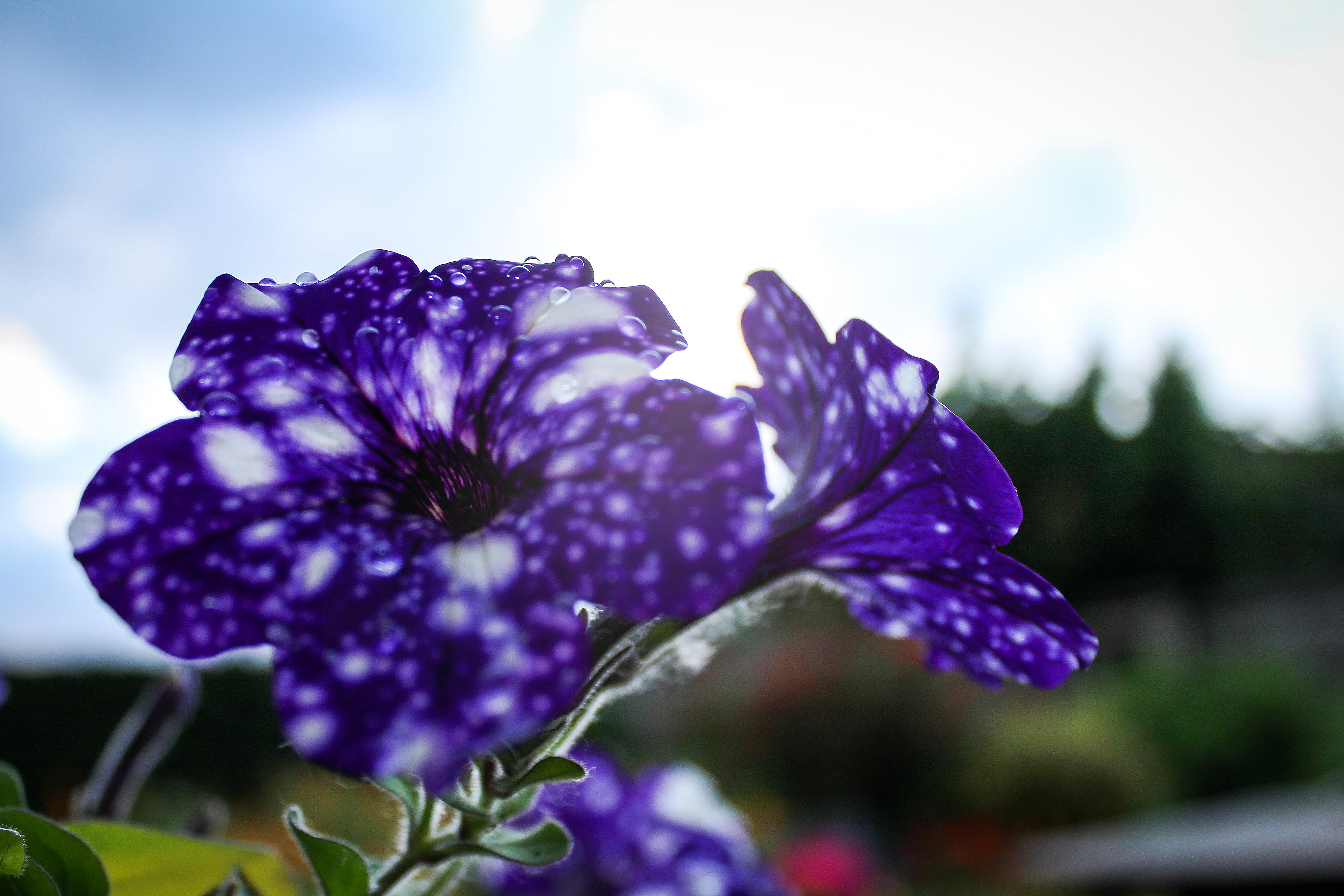 Free stock photo of clear, clear day, drop, flower