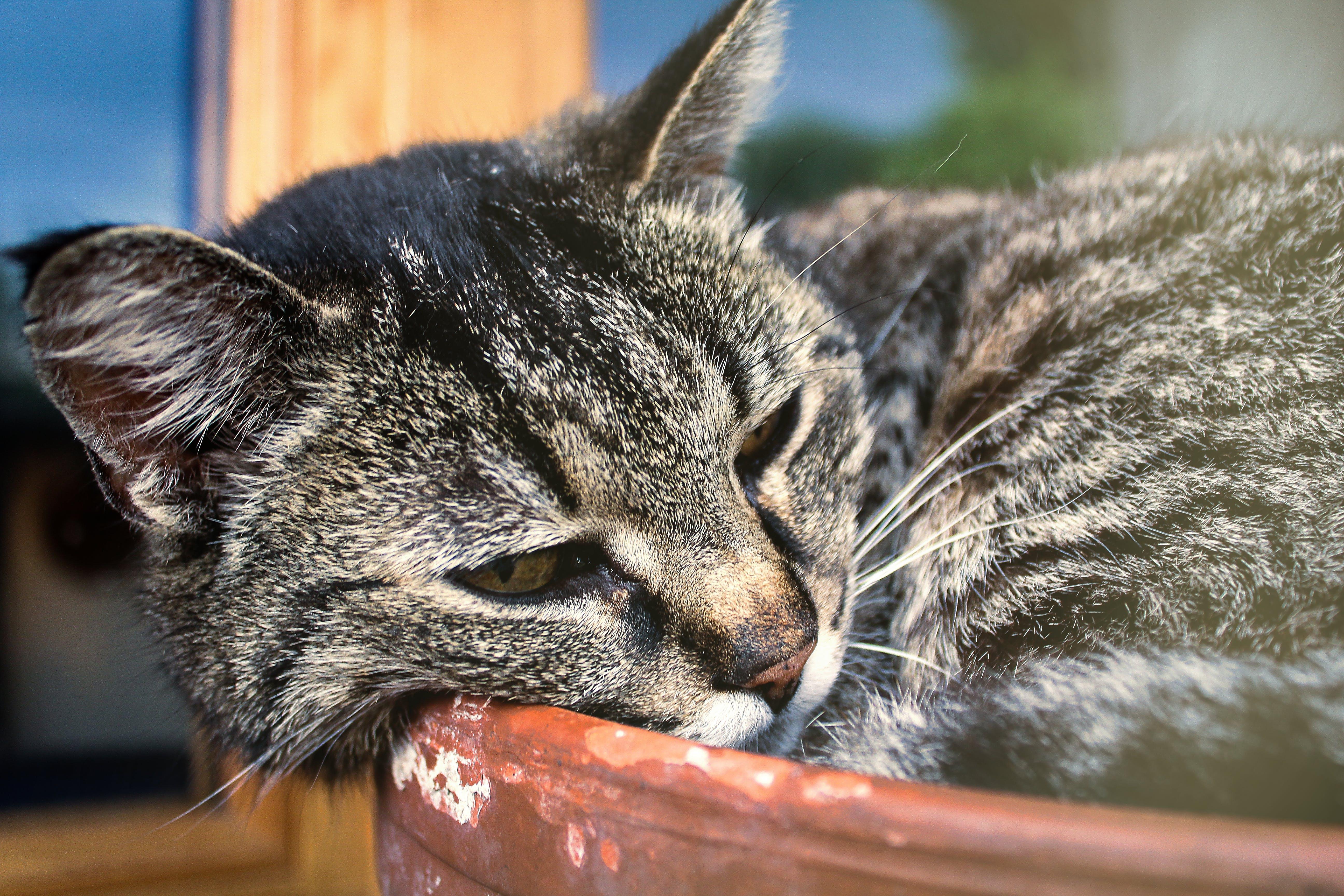 Free stock photo of cat, plant, pot, sleep
