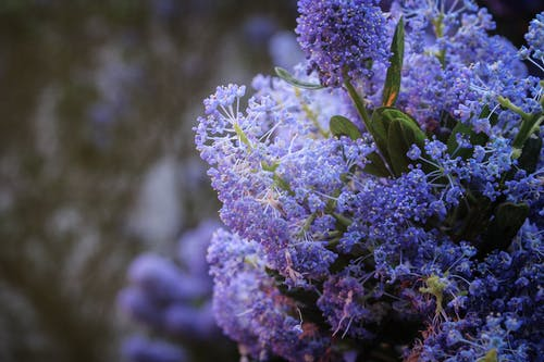 Selective Focus Photography of Purple Petaled Fowers