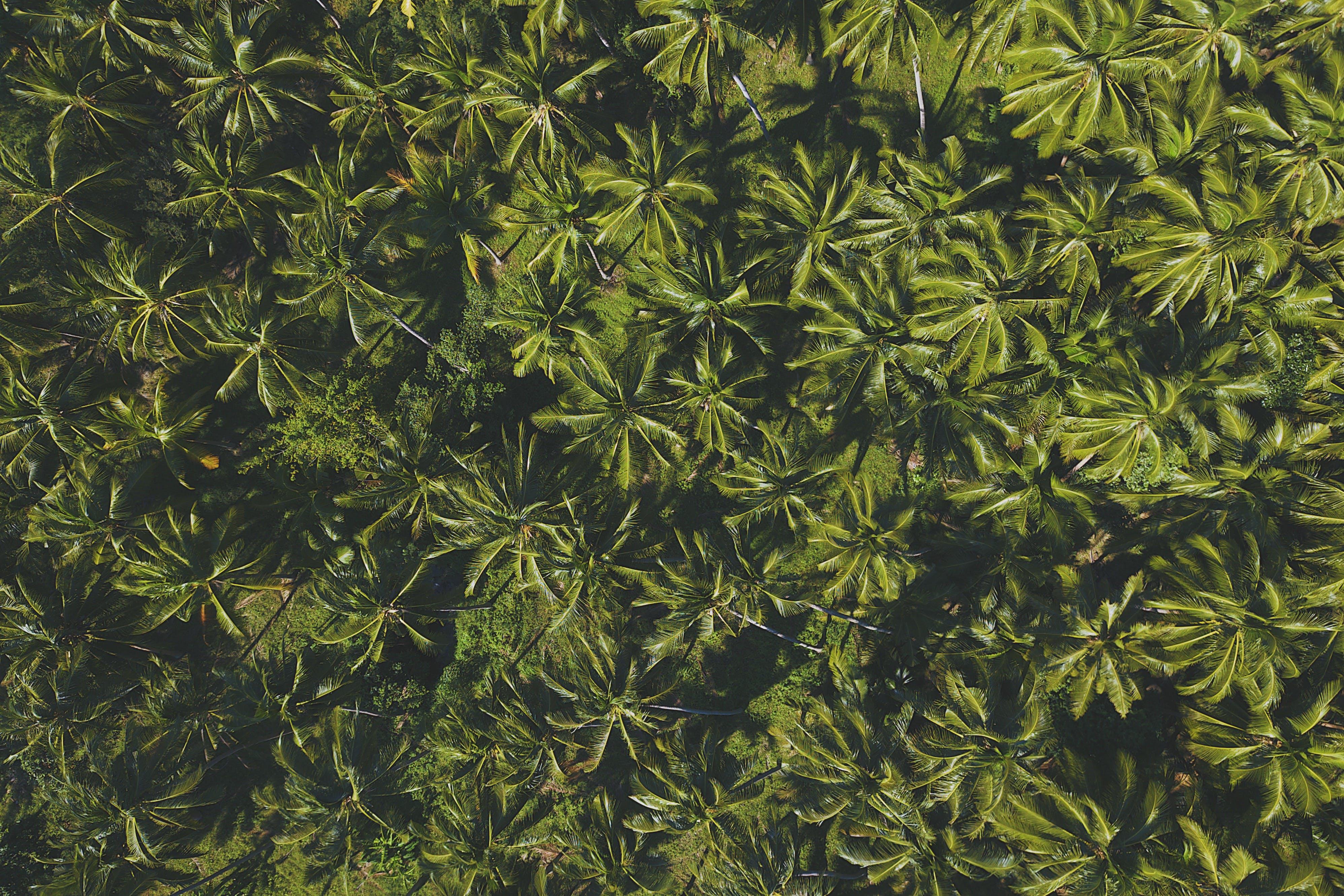 Kostenloses Stock Foto zu vogelperspektive, bäume, blätter, luftaufnahme