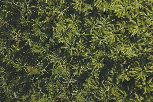 Groene Doorbladerde Plant