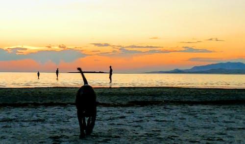 Gratis lagerfoto af familie, himmel, hund, solnedgang