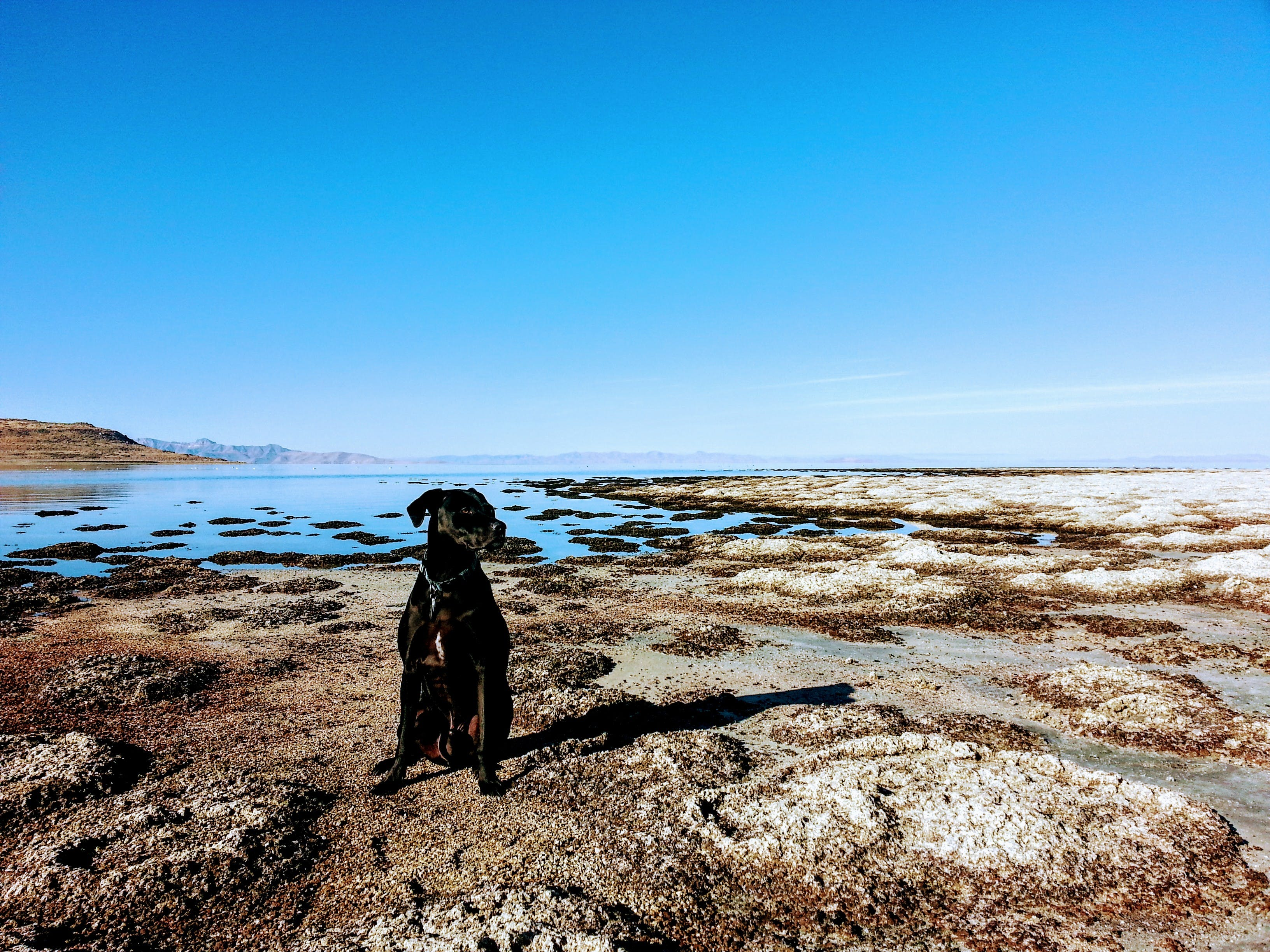 Dog Sitting in the Shore