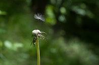 light, blur, flower