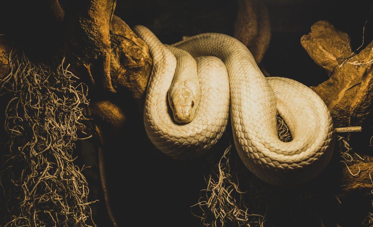 Beige Python on Brown Branch of Tree