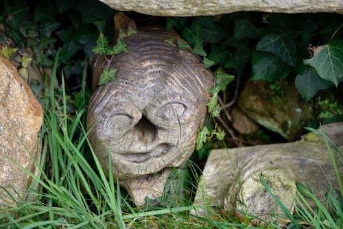 Fotobanka sbezplatnými fotkami na tému abstraktné, arbre, bois, bouche