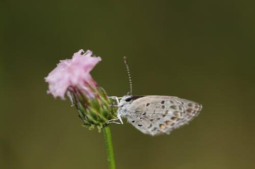 Darmowe zdjęcie z galerii z motyl na kwiatku