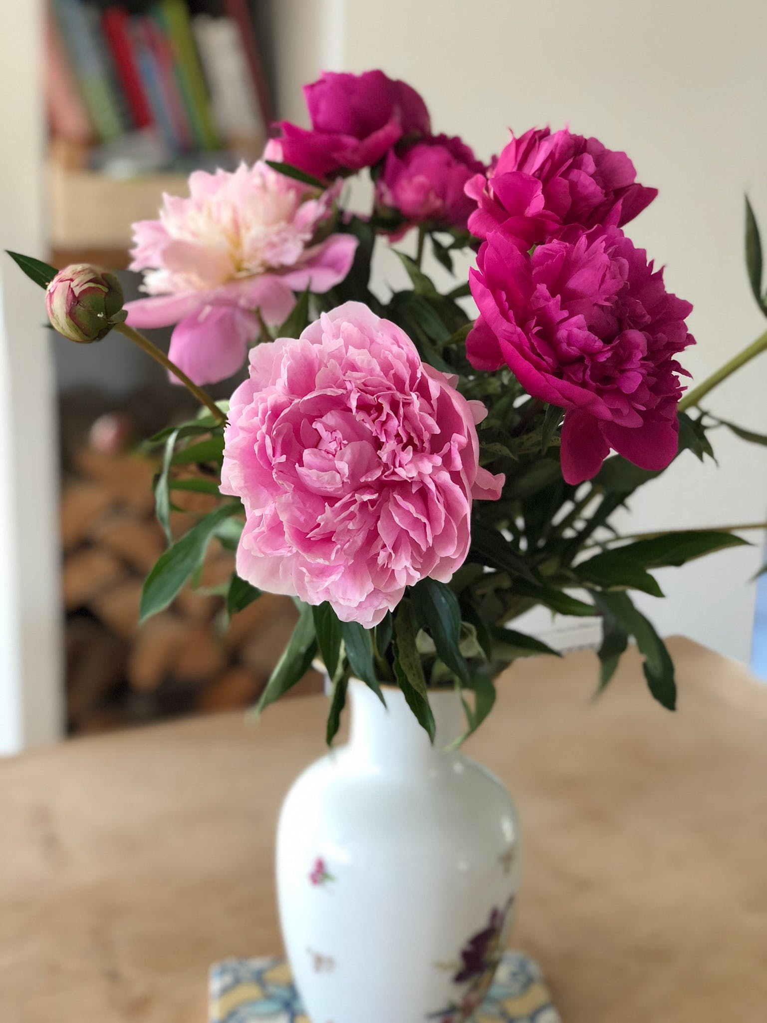 Free stock photo of peonies, time