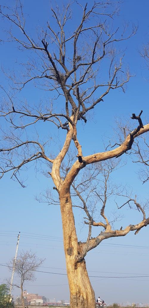 Free stock photo of Beautiful tree, dead tree, dead trees