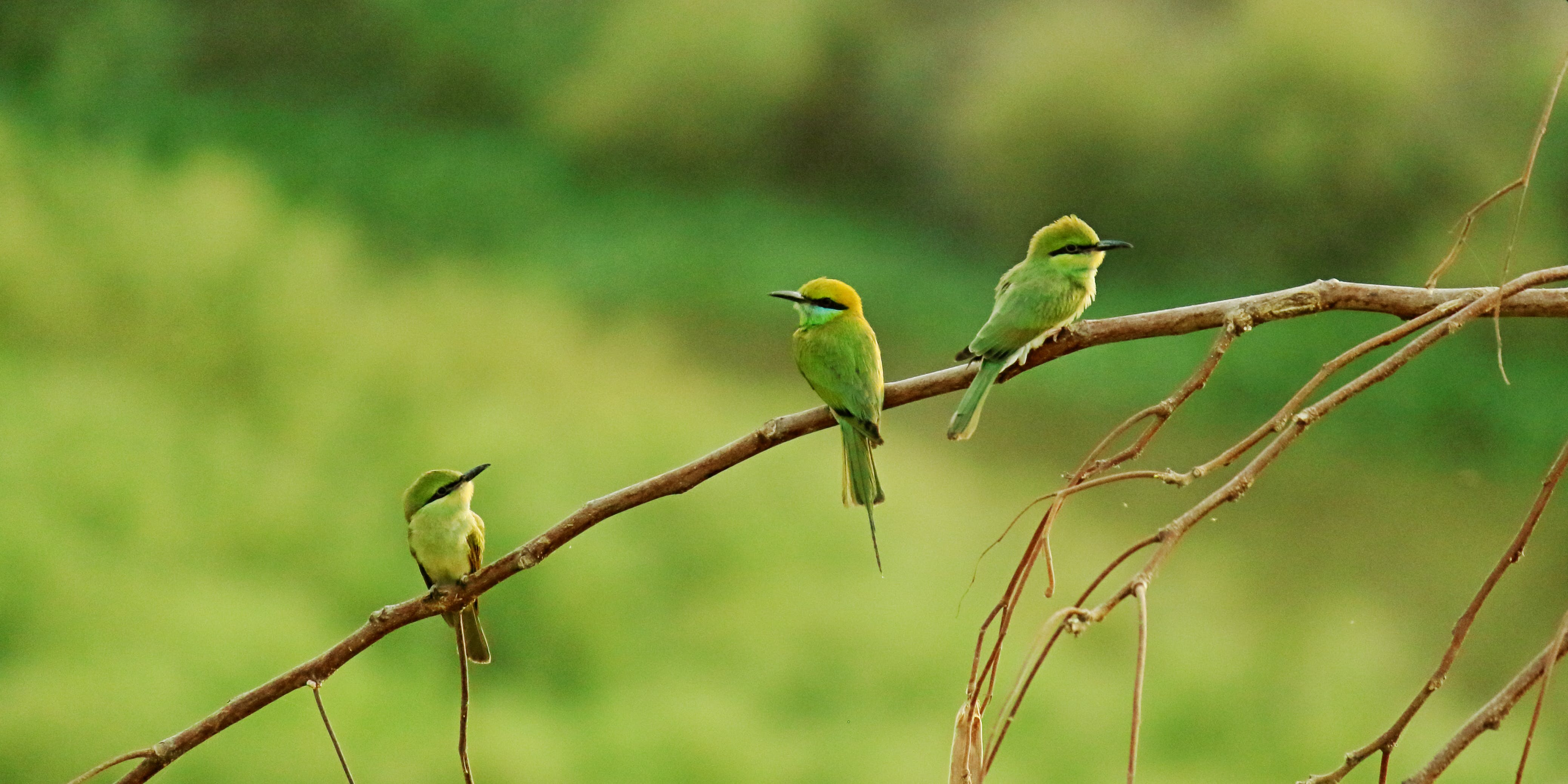 Three Long-beaked Small Birds Perched on Brown Tree Branch