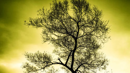 HD wallpaper de alba, arbre, bonic, branques