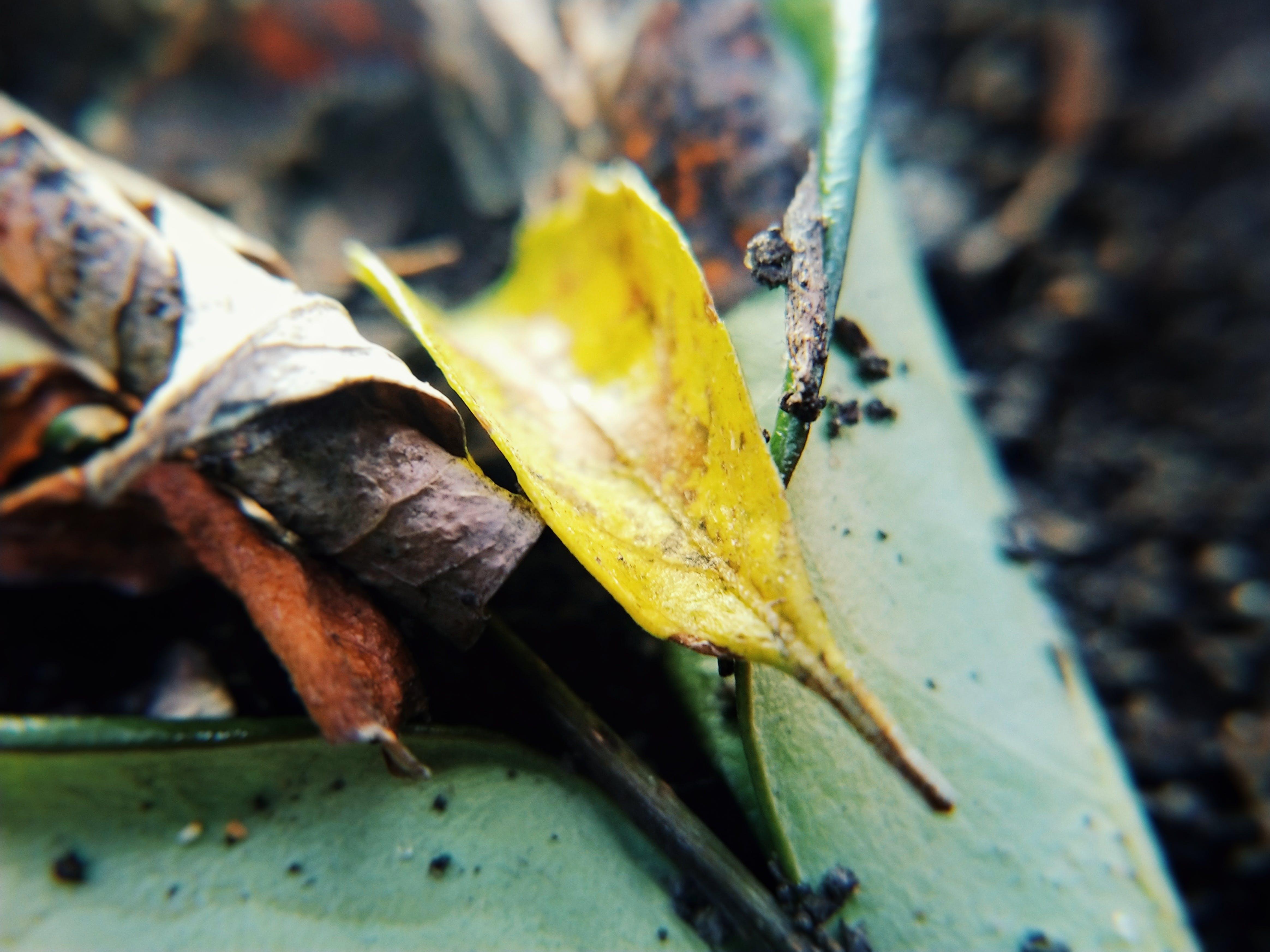 Free stock photo of art, autumn leaf, close-up, grain