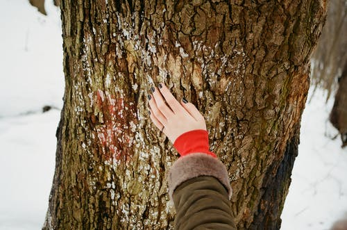 Person Holding Brown Tree Bark at Daytime