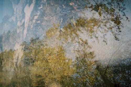 Foto profissional grátis de árvores, dupla exposição, floresta, natureza