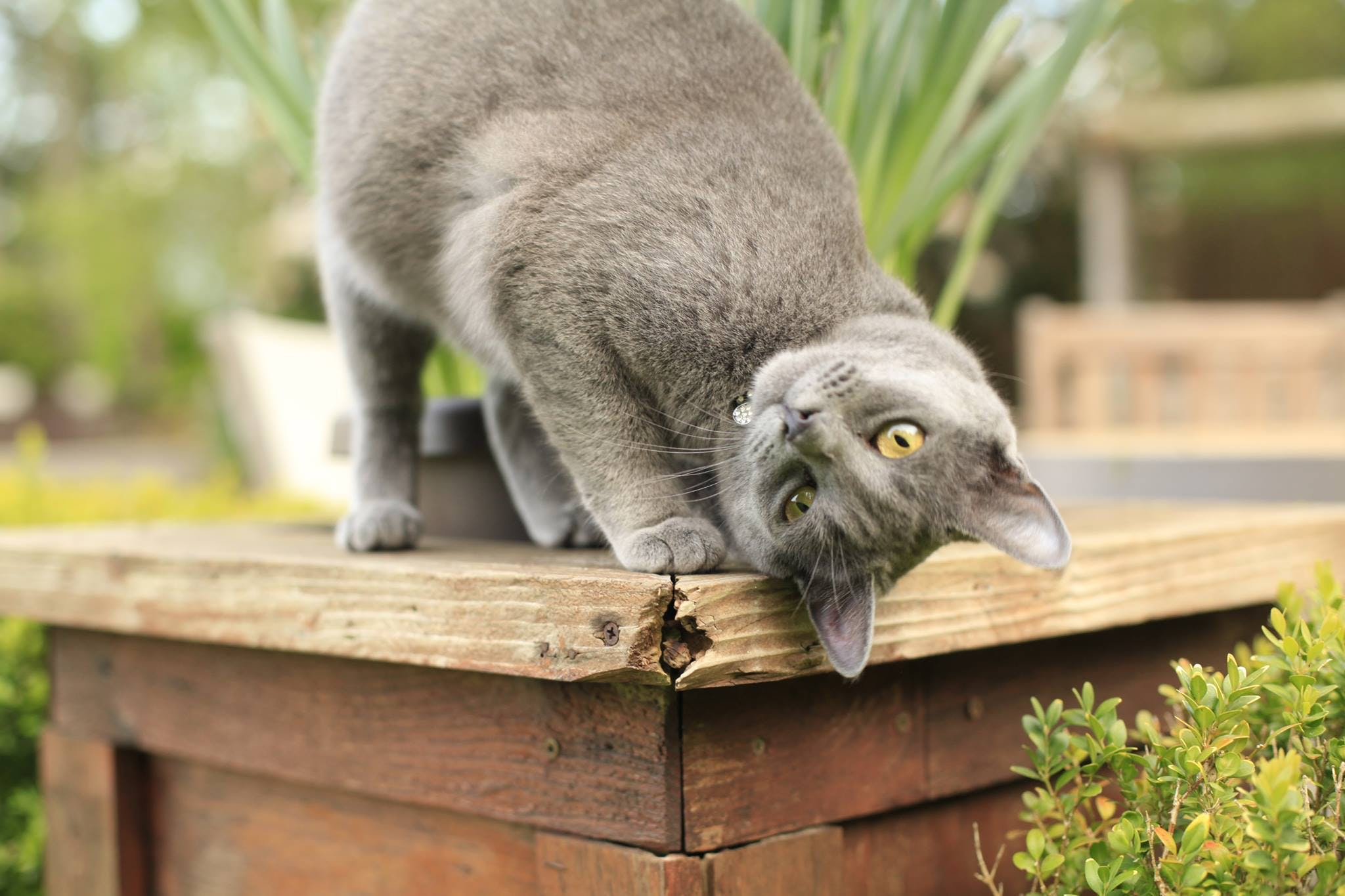 Free stock photo of animal, background, cat, communicate