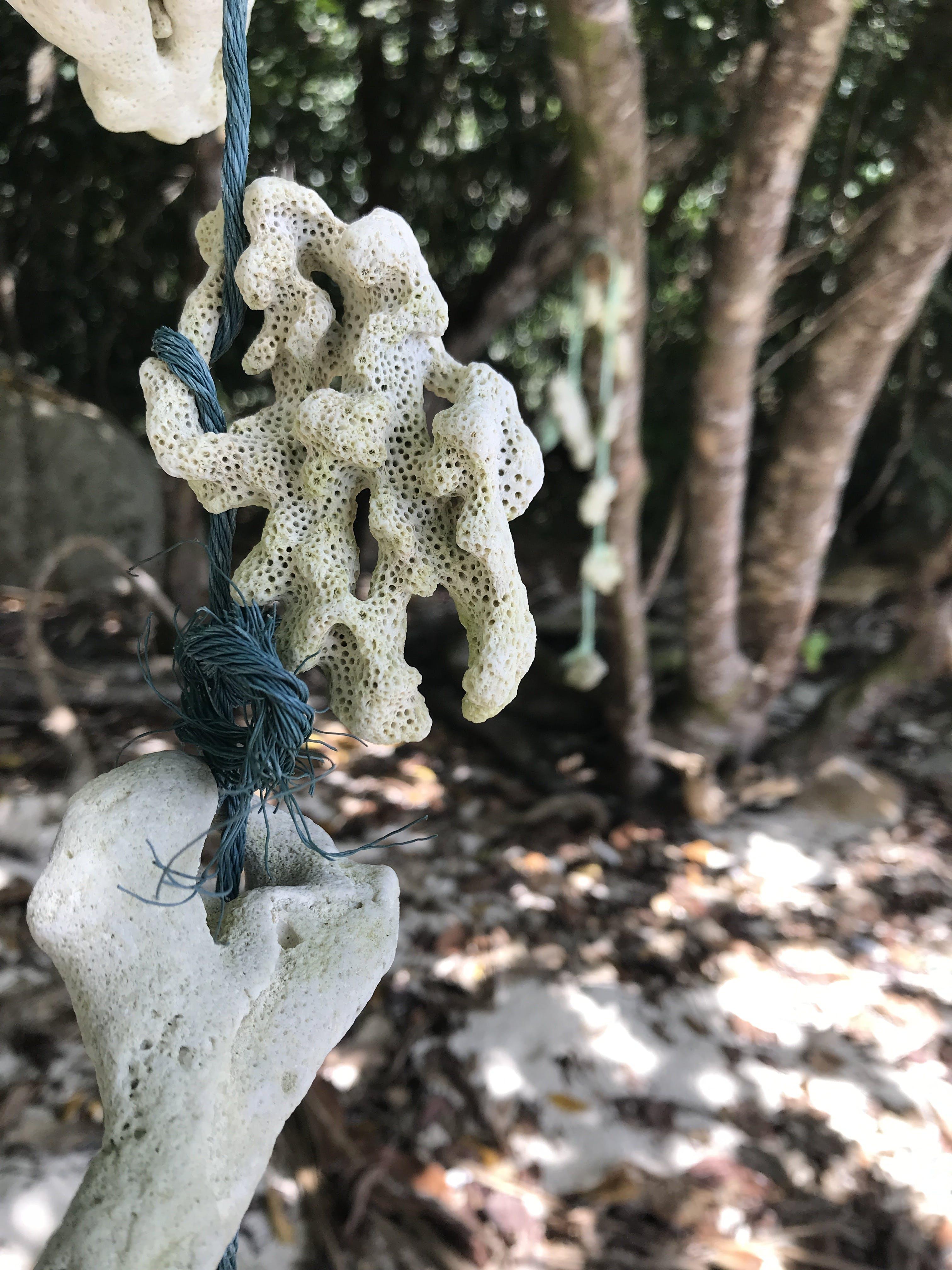 Kostenloses Stock Foto zu koralle, strand