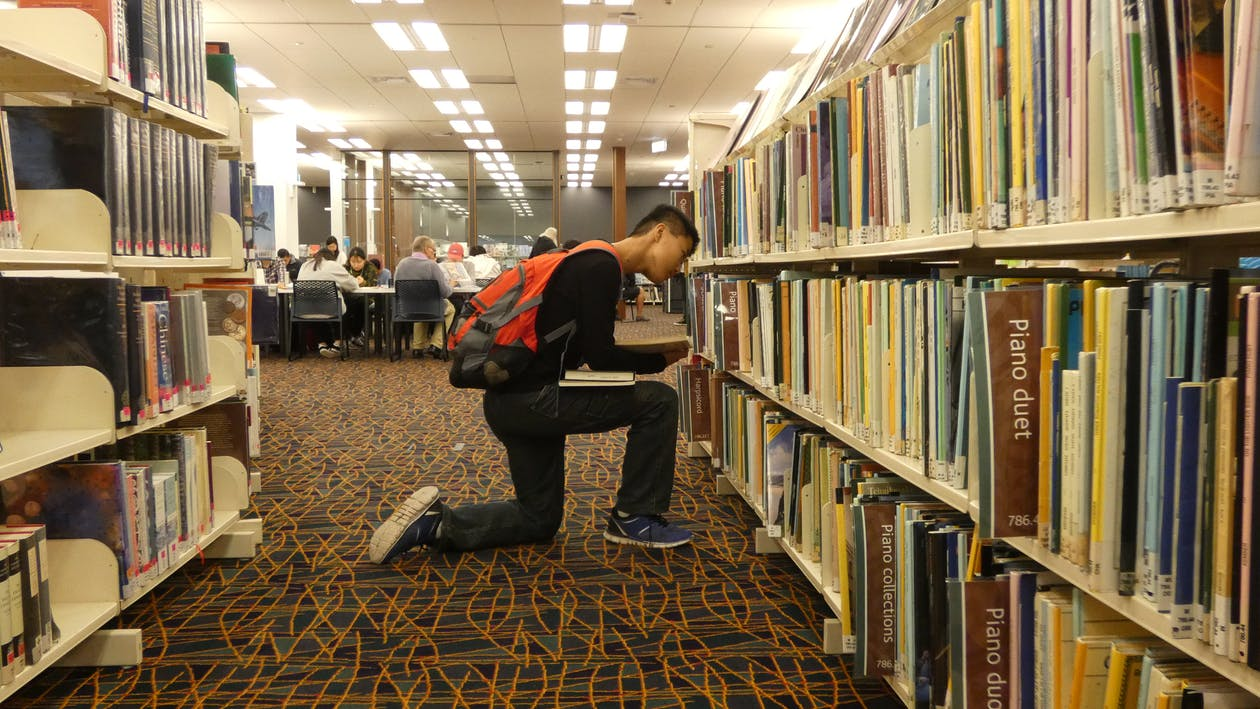 Free stock photo of college students, library, studying