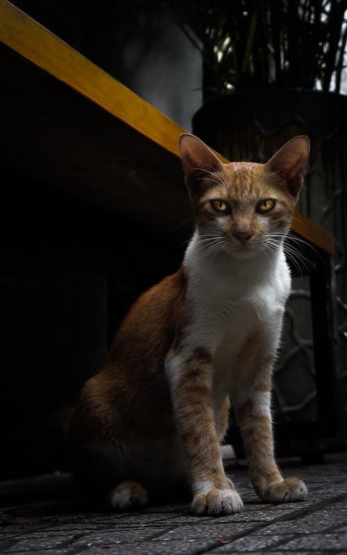 アニマイ, ネコ, 怒っている, 怖いの無料の写真素材