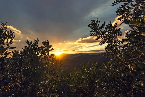 Δωρεάν στοκ φωτογραφιών με αυγή, δέντρα, ελαφρύς, ήλιος
