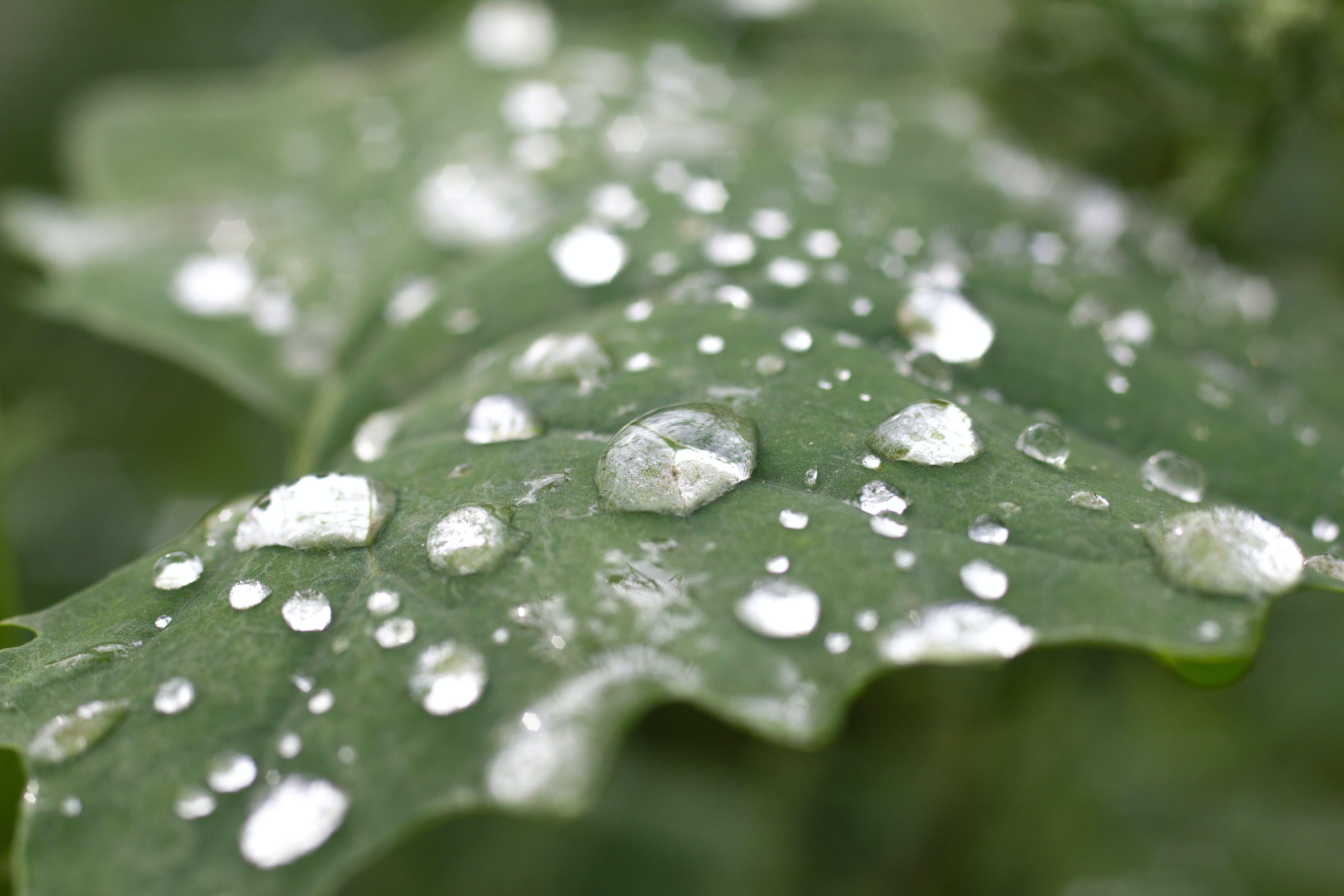 close-up, dew, leaf