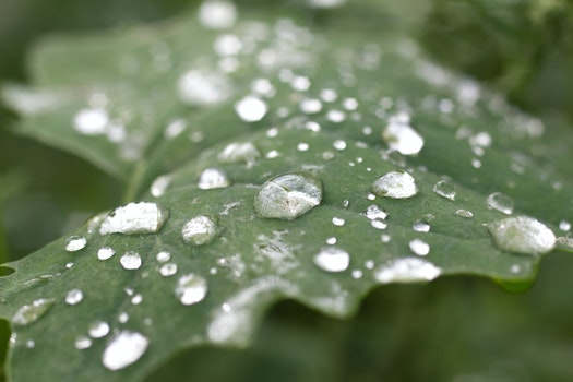 Nature wallpaper of nature, water, leaf, dew