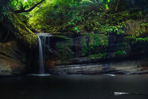 Waterfall Surrounded by Green Leaf Trees