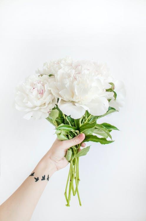 白牡丹の花束のクローズアップ写真を保持している人