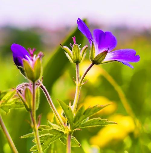 alan, Bahçe, bitki, bitki örtüsü içeren Ücretsiz stok fotoğraf