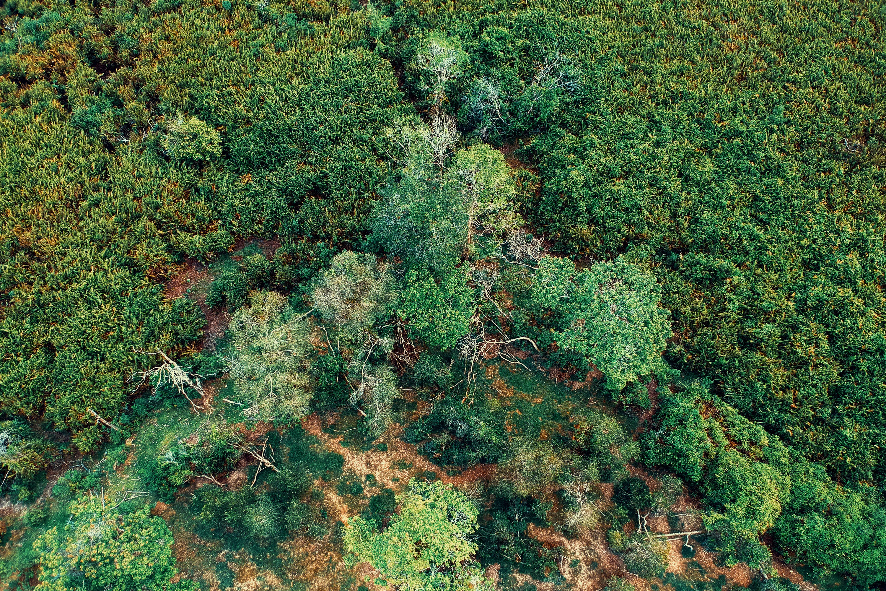 Aerial Photo Of Green Trees
