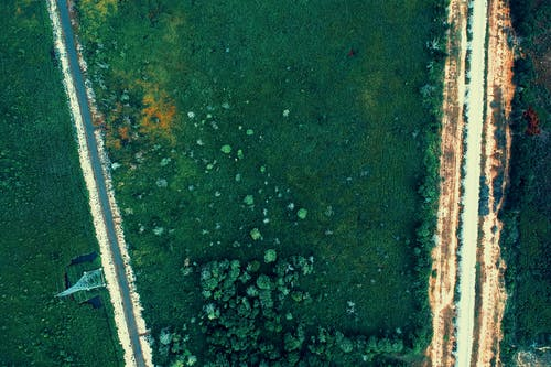 Fotobanka sbezplatnými fotkami na tému letecký záber, pohľad zvtáčej perspektívy, stromy, zelená