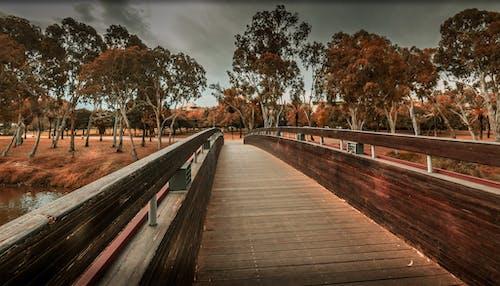 Free stock photo of bridge, landscape, park