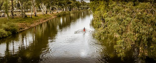 Free stock photo of landscape, park, rower