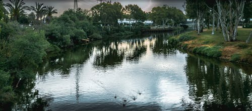 Free stock photo of ducks, landscape, park