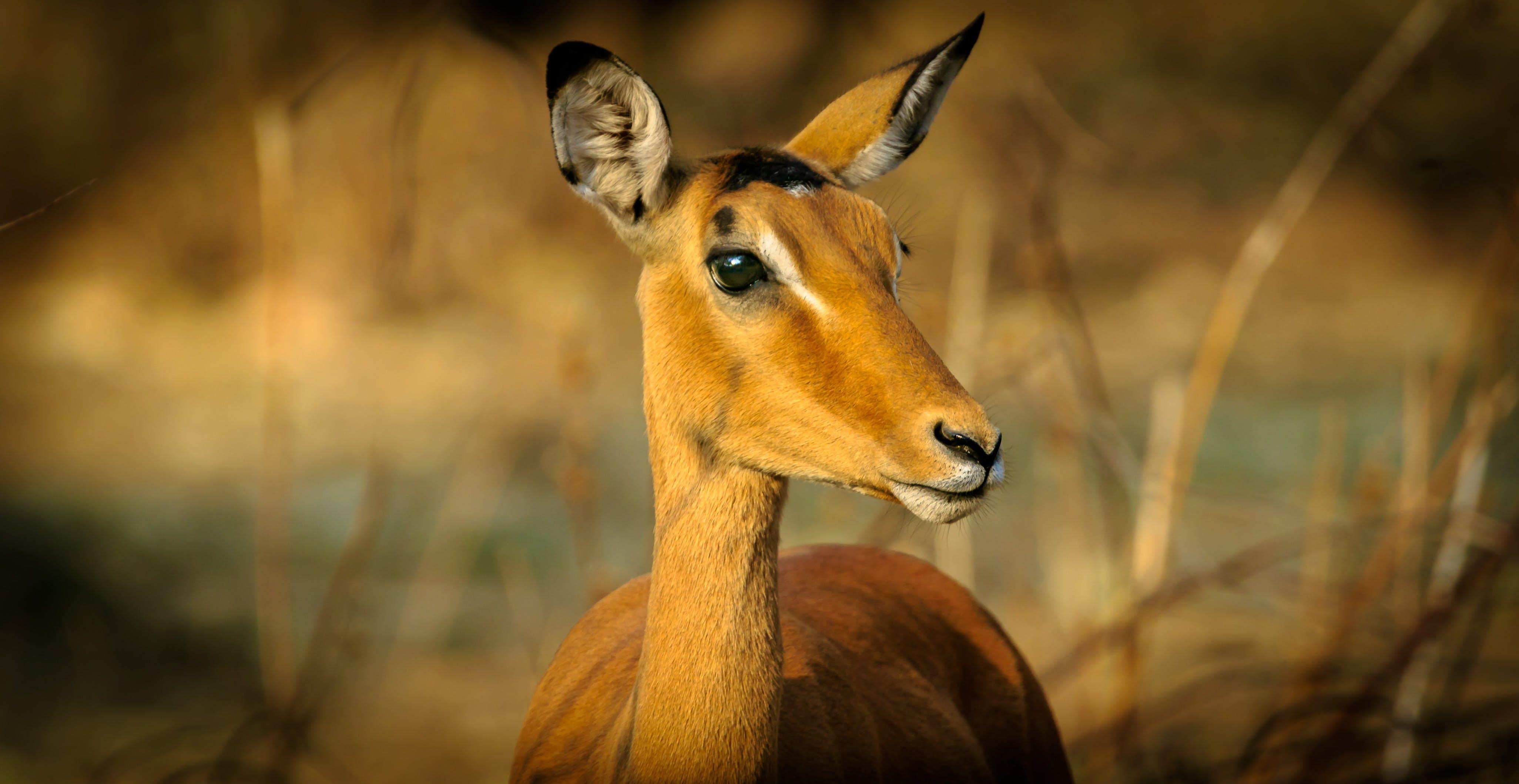 Closeup Photography Of Animal At Daytime