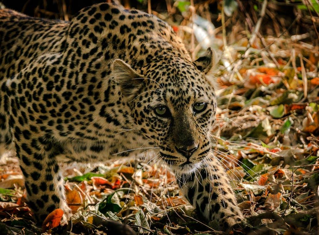afrika, dyr, dyrefotografering
