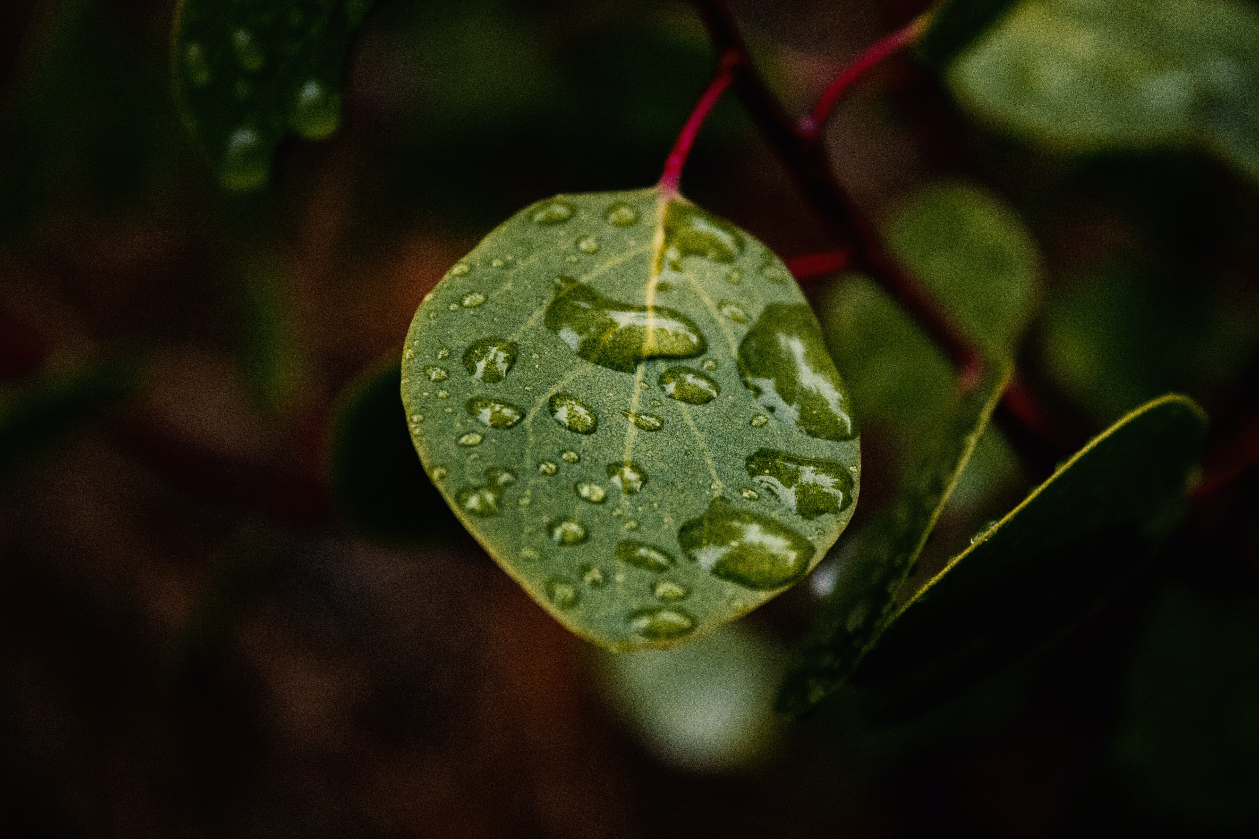 Green Leaf With Water Dew