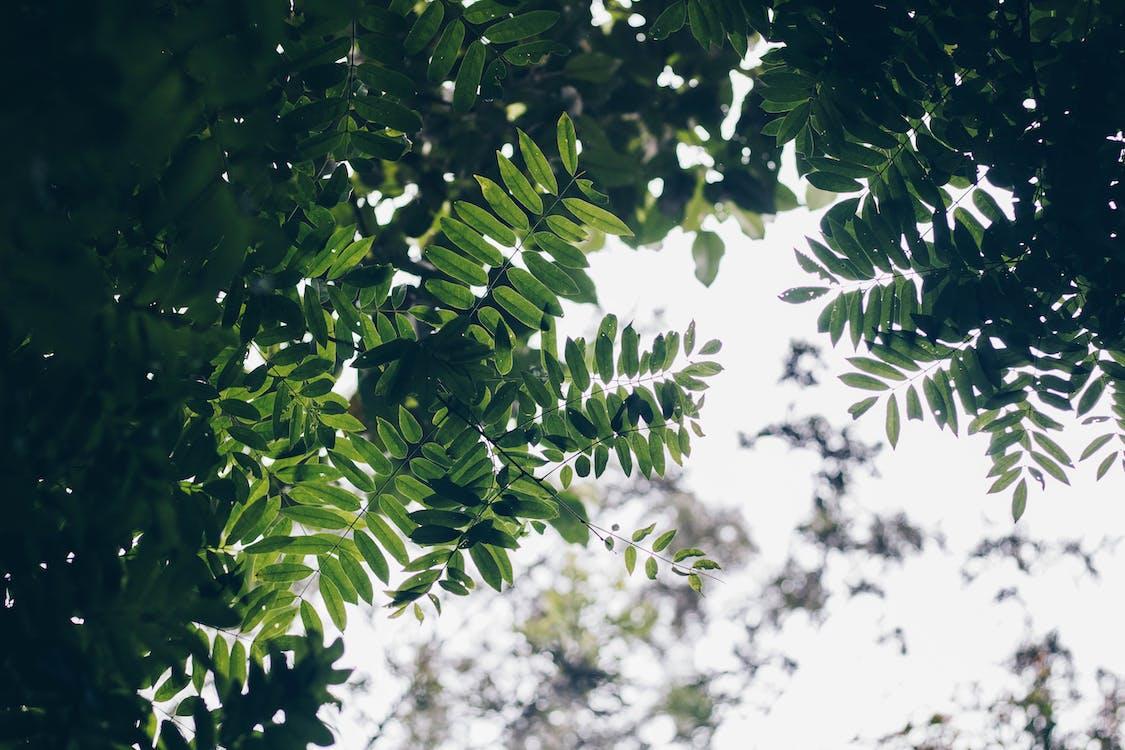 drzewo, roślina, wzrost