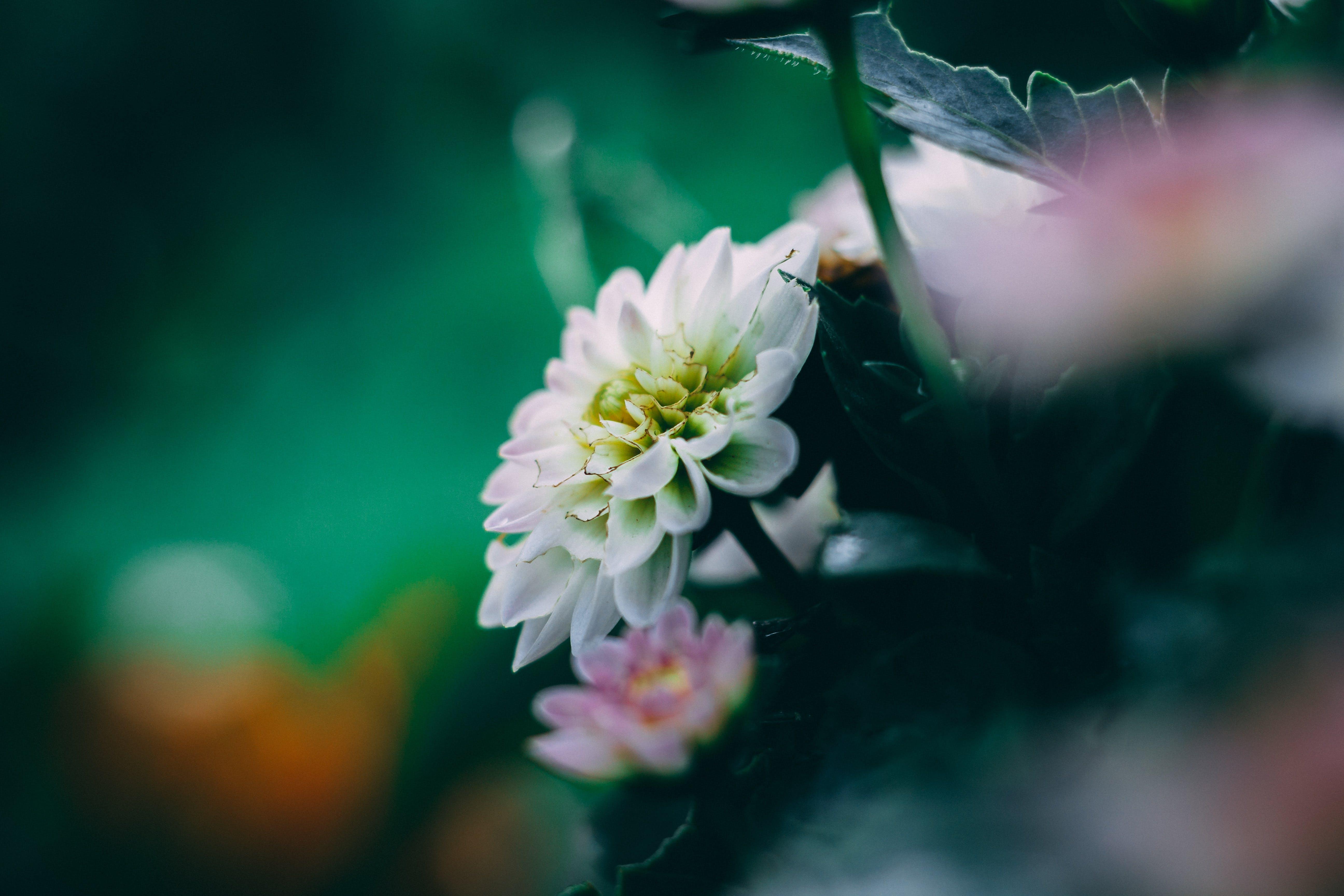 フローラ, マクロ, 咲く