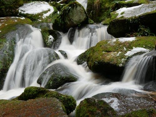 Foto d'estoc gratuïta de bosc, hivern, verd, waterf