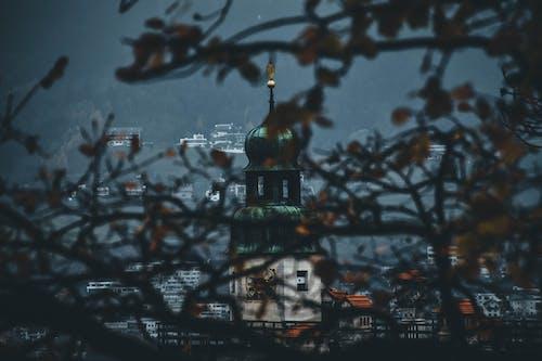 Foto stok gratis bangunan, cabang, kota, pohon
